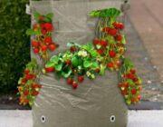 Выращивание клубники в мешках