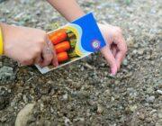 Благоприятные дни для посадки моркови