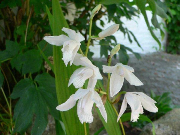 орхидеи благоприятные дни 2018