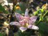 Благоприятные дни для посадки орхидеи в 2018 году