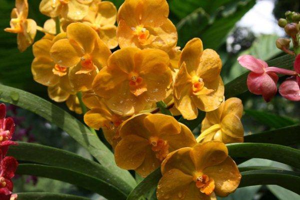 садовые орхидеи 2018