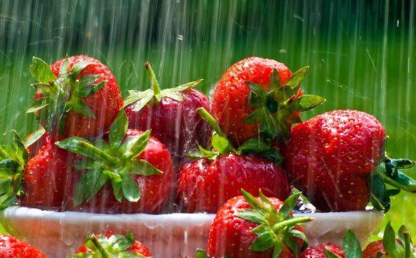 Как поливать клубнику во время плодоношения1