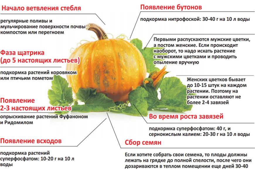 Схема формирования тыквы
