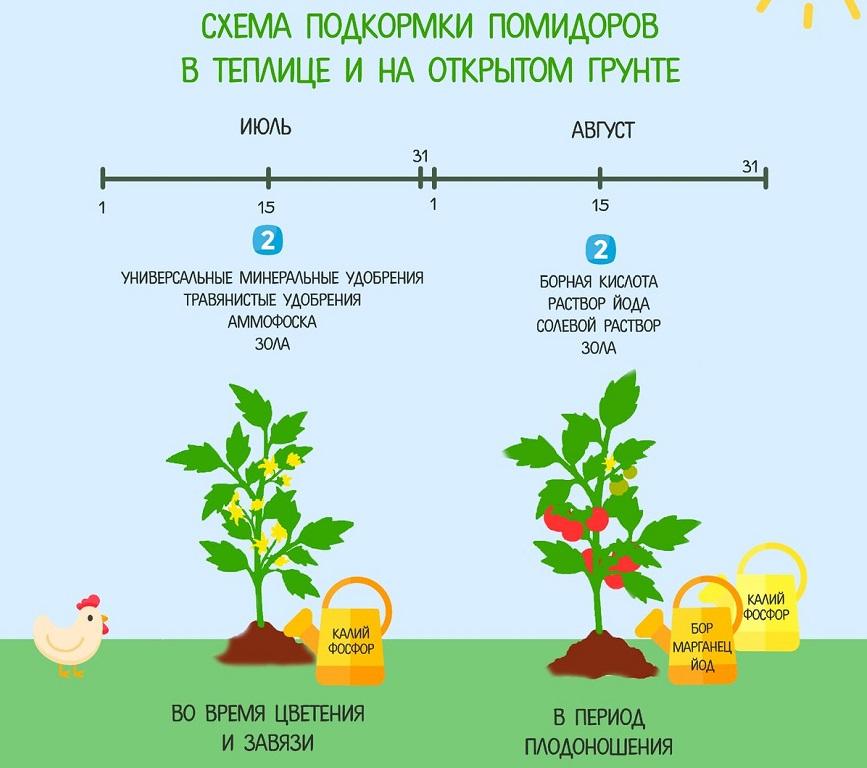 Схема подкормки помидоров в открытом грунте