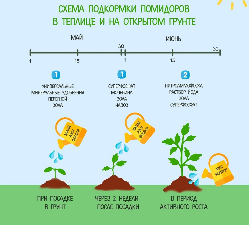 Схема полива помидоров